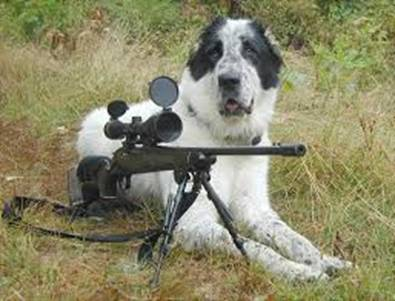 dog and gun