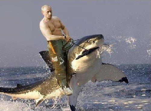 putin riding a shark