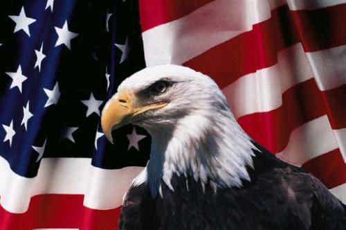 bald eagle flag america