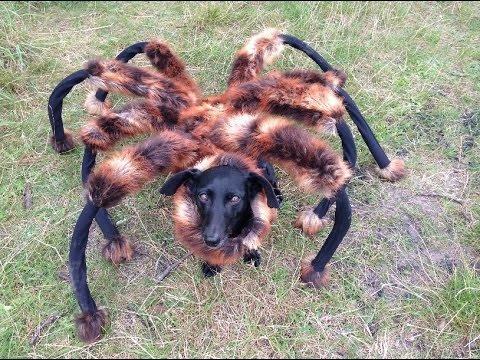 spider dog goddamn it