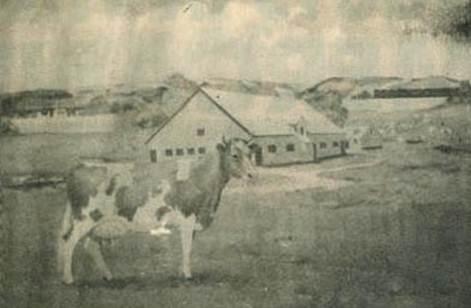 elm farm ollie