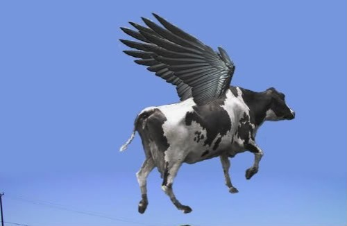 winged cow