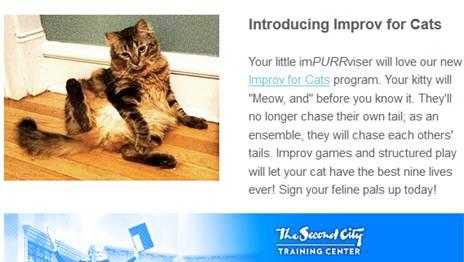 cat improv