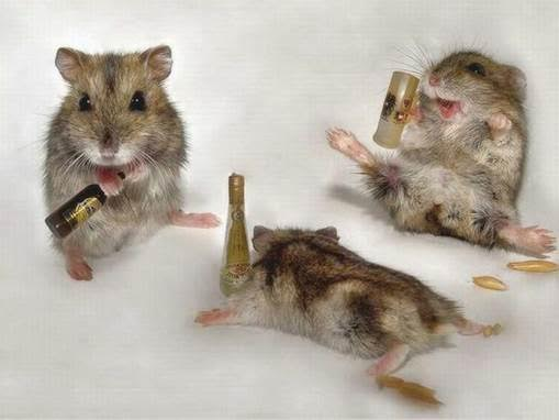 mice with wine