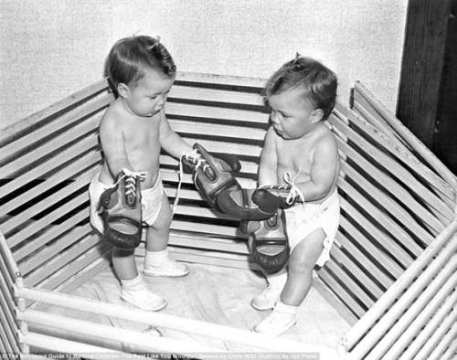 boxing babies