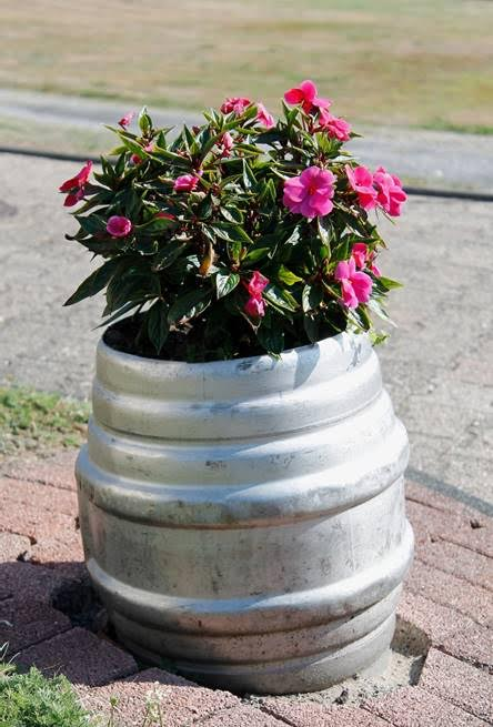 plants in keg